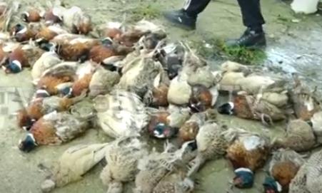 STRAVIČNA SCENA u Inđiji! Ovakva katastrofa nije viđena 100 godina, za sve krivi gladni psi (VIDEO)