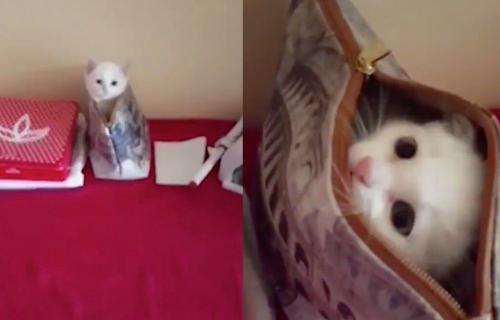 Sad me vidiš, sad me ne vidiš! Neodoljivo MAČE u neseseru ZAČIKAVA svoju vlasnicu (VIDEO)