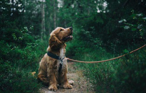 NEĆU KUĆI i tačka! Ovaj pas je toliko tvrdoglav, da će vas stomak zaboleti od smeha (VIDEO)