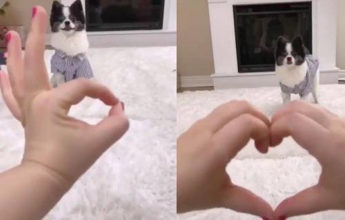 Vrcavi pas strpljivo čeka da vlasnica stavi ruke u određen POLOŽAJ, a onda uradi nešto PRESLATKO (VIDEO)