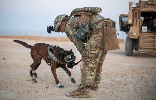 Vojni psi testiraju PAMETNE naočare, evo čemu služe (FOTO)