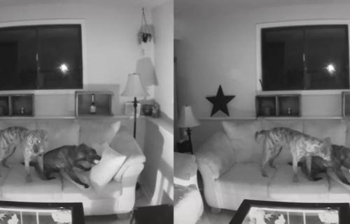 Dobila je obaveštenje o neobičnim aktivnostima u stanu, a onda je pregledala snimke i imala šta i da VIDI