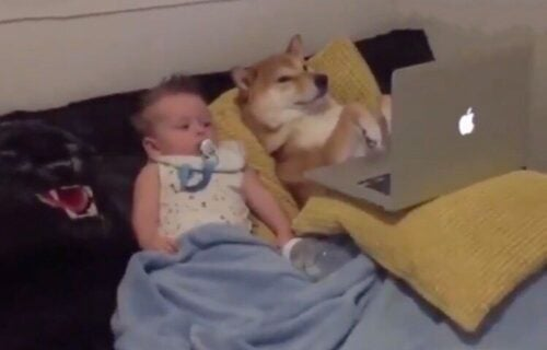 Uživancija sa drugarom: Beba i pas ušuškani gledaju CRTAĆE i ne trepću (VIDEO)