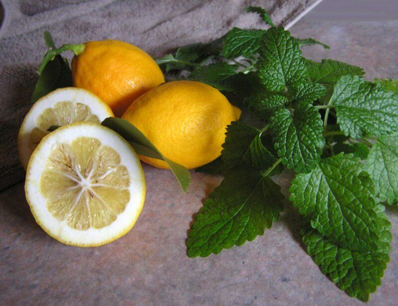 matičnjak i limun
