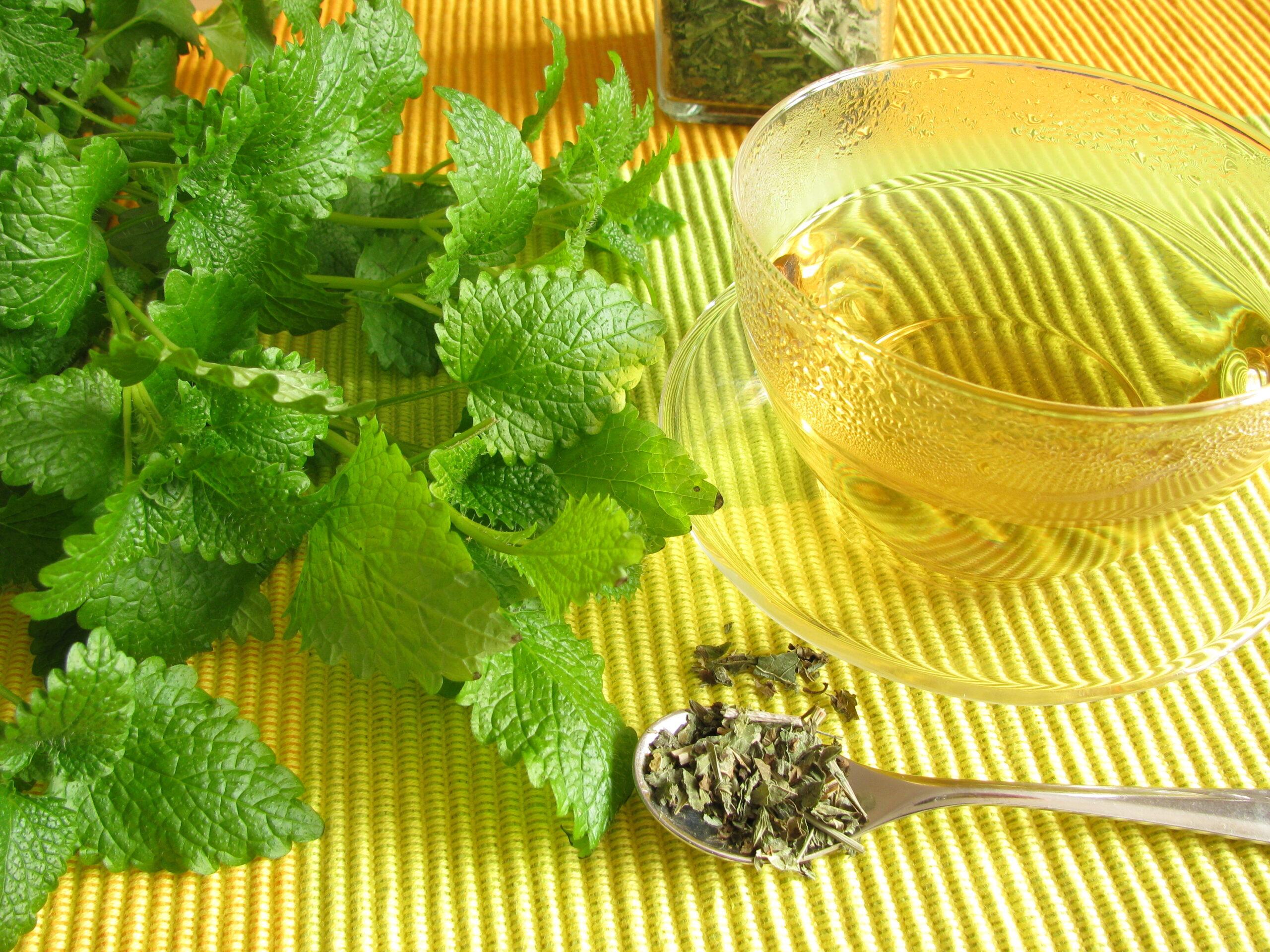 Čaj od matičnaka na stolu
