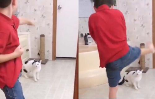 Sa njom nema šale! Dečak je pred MAČKOM izvodio borilačku veštinu, a onda je ona uradila OVO (VIDEO)