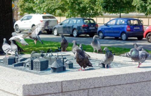 Da li ptičji izmet na vašem automobilu donosi SREĆU? Odgovor će vas IZNENADITI