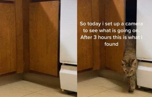 """Mislili su da imaju duhove, ali iza problema sa """"ukletim ormarićem"""" stoji nečija ŠAPA (VIDEO)"""