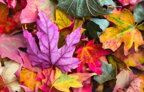 """Tradicionalna jesenja izložba: Postavka """"Upleteni""""u """"Cvijeti Zuzorić"""""""