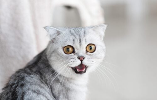 Mačka je mirno ušla u sobu, ali kada je videla oko čega se PSI OTIMAJU, nije joj bilo dobro (VIDEO)