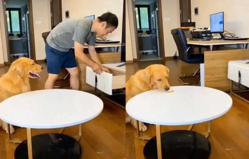 Pametan manipulator: Izveo je LUKAVU akciju samo da bi PREVARIO vlasnika da nije pojeo poslasticu (VIDEO)