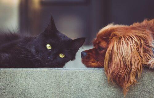 Čijeg ti PSA diraš? Komšijska maca je na teži način naučila šta nikako ne sme da radi (VIDEO)