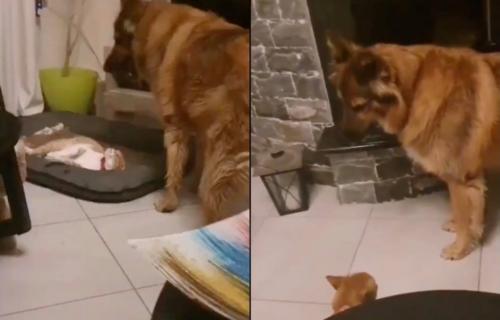 Ne diraj mačku dok spava! Pas je hteo da se igra, a onda se gorko POKAJAO što ju je probudio (VIDEO)