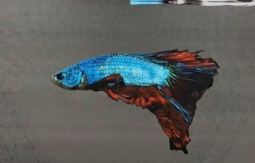 Ribe nisu ŽIVE? Iluzijom i jednim pokretom četkice umetnik tera ljude da proveravaju dioptrije (VIDEO)