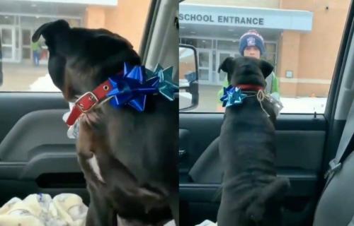 Ne zna se ko je SREĆNIJI! Emotivni susret dečaka i PSA, koji je 2 nedelje bio IZGUBLJEN (VIDEO)