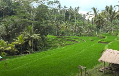 Svi su bili u čudu: Na Baliju na nesvakidašnji način kažnjavaju one koji ne nose maske (VIDEO)