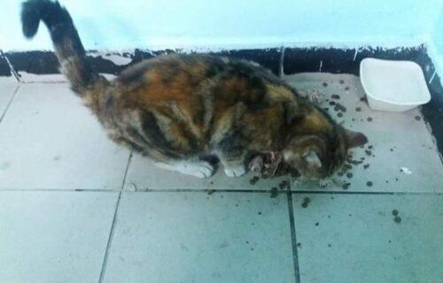 Ko nađe Micu dobije 250 evra: Drama omiljene mace digla Lajkovac na noge (FOTO)