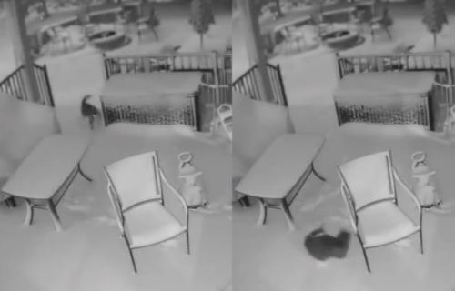 Nadzorna kamera snimila mačku kako UŽIVA u snežnoj OLUJI (VIDEO)