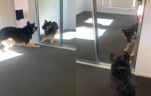 Kakav blesan: Posvađao se sa svojim odrazom u OGLEDALU (VIDEO)