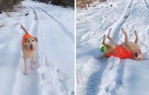 Trči sprint, hoda unazad i pravi anđele u SNEGU: Snimak labradora u šetnji postao HIT (VIDEO)