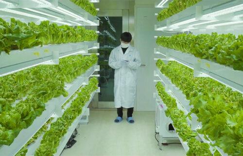Planty Cube: U ovim kontejnerima kriju se farme budućnosti (VIDEO)