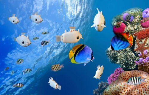 Ribe-roboti istražuju okean i čuvaju prirodu (VIDEO)