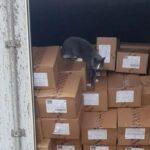 Niko nije znao da je u kamionu: Mačka PREŽIVELA tronedeljno putovanje bez vode i hrane