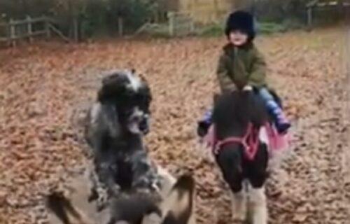 Videli ste puno puta kako deca uče da jašu ponije, a da li ste nekada gledali psa džokeja? (VIDEO)
