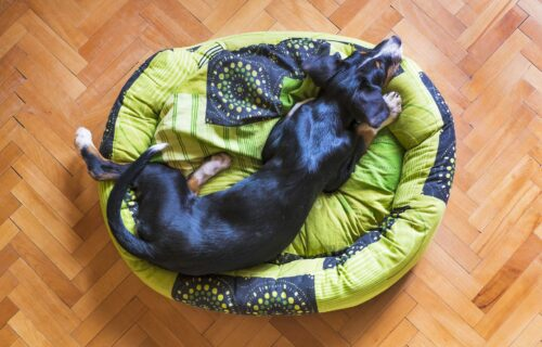 Ne bacajte stari džemper: Napravite svom kućnom ljubimcu nov krevet (VIDEO)