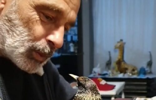 Konačno pravi rival: Vlasnik zviždao, a onda se ptica smrtno UVREDILA i pokazala mu ko je bolji (VIDEO)