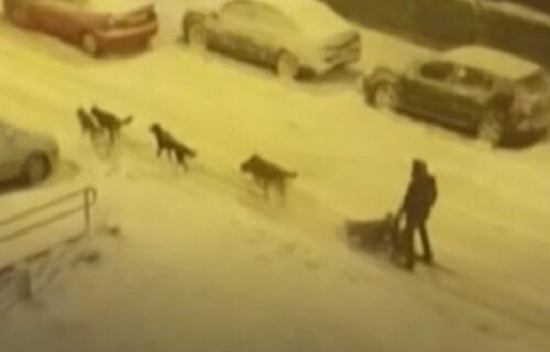 Madrid prekriven snegom je i dalje hit: Muškarac UPREGAO pse da mu vuku sanke (VIDEO)