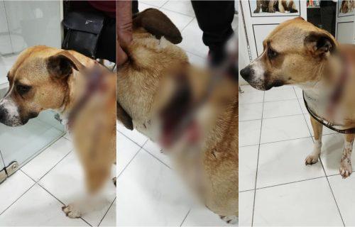 (UZNEMIRUJUĆI SADRŽAJ) Žena iz Jagodine ISKASAPILA miroljubivog psa: Svog ljubimca krvnički ubadala nožem