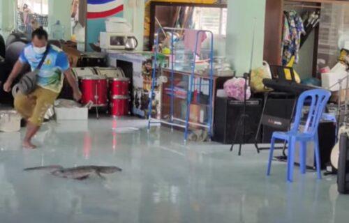 Urnebesno: Ogroman GUŠTER otkriven u sali za muzičko - toliko se prepao, da je počeo da pleše (VIDEO)