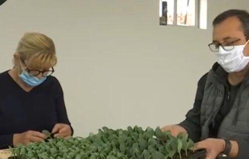 Milanka i Dejan žive u CARSTVU bostana: Za dva meseca prodaju 15.000 sadnica, evo šta kažu o CENI