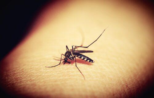 Od ovih biljaka komarci BEŽE glavom bez obzira: Spremite se za borbu protiv upornih KRVOPIJA