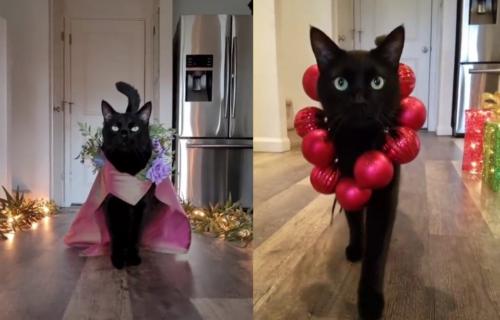 Pravi CAT WALK: Ova maca bi mogla da drži časove modelinga (VIDEO)
