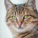 Mačka svakog dana ulazi u kuću nepoznate žene, a sve da bi radila OVO (VIDEO)
