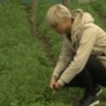 Nije znala ni šta uzgaja, a sada zarađuje i 2.000 dinara po kilu: Danijela se prodajom ove biljke OPARILA