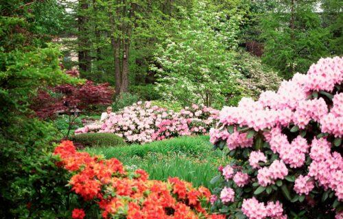 Višegodišnje cveće za dvorište koje je lako za održavanje