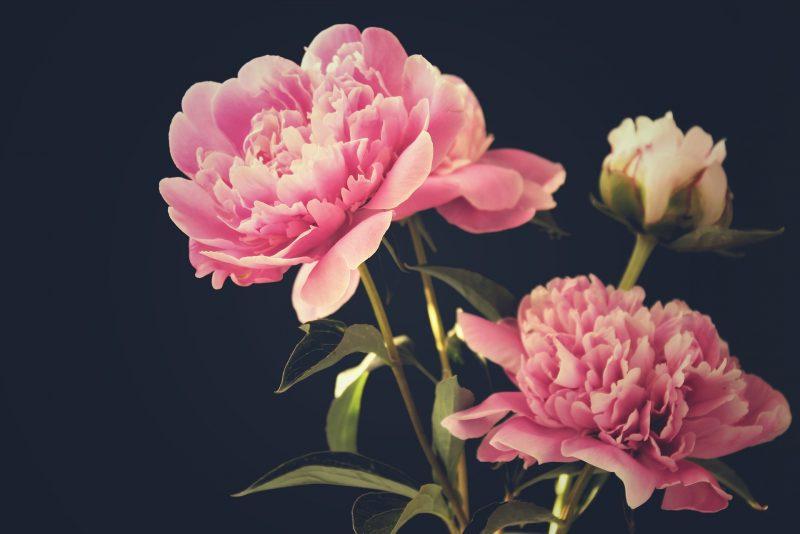 Cveće za dvorište