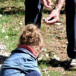 Predstavio se kao njen deda: Oteo devojčicu iz vrtića, a onda je priča doživela nezamisliv obrt