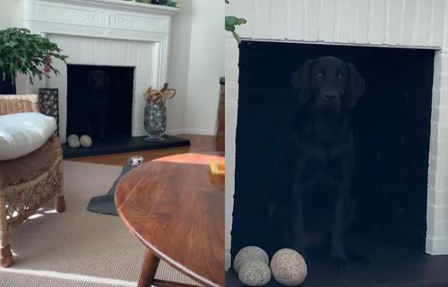 Mislila je da je izgubila psa u stanu, a on je zapravo majstor KAMUFLAŽE (VIDEO)