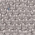 Samo 10 odsto ljudi ju je ugledalo: Među ovim rakunima, nalazi se i jedna MAČKA - vidite li je? (FOTO)