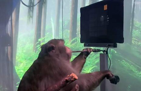 Budućnost je stigla: Majmun preko implanta Ilona Maska SAM odigrao video igricu (VIDEO)