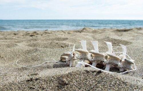 Pronađen GRAD MRTVIH: Leševi razbacani ispod obale, prava istina zapanjila je meštane