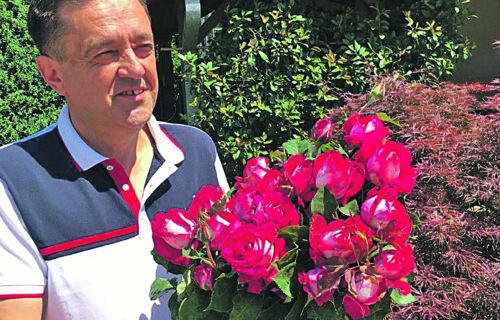 """Srpske ruže vrede MILIONE EVRA: Najpopularnija se proizvodi samo kod nas, a """"monika beluči"""" je lepotica"""