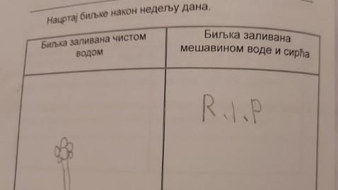 Zbog ZADATKA osnovca iz Srbije internet se usijao: Mališan je NASMEJAO sve koji su pročitali (FOTO)