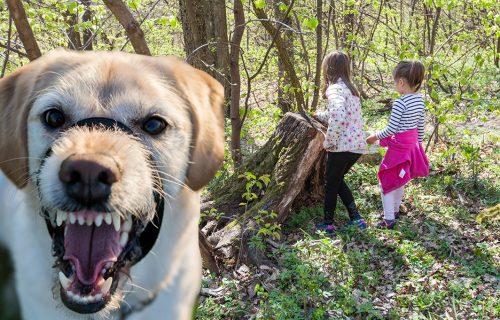 UŽAS na Fruškoj Gori: BESNI psi izujedali dve devojčice i njihovog dedu koji je pokušao da ih zaštiti