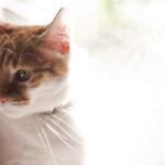 Ponudila joj je BROKOLI, a reakcija ove mačke će vas NASMEJATI od srca (VIDEO)