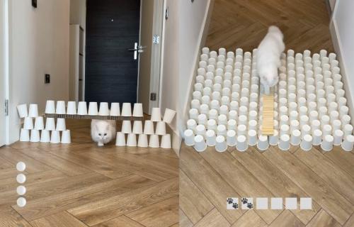 Vlasnica joj uporno postavlja PREPREKE, a ona ih sve uspešno REŠAVA: Ova mačka će vas ODUŠEVITI (VIDEO)